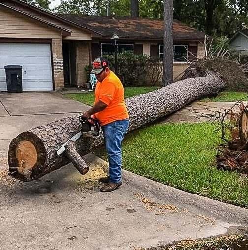 Удаление опасных деревьев